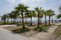 Ramped Beach Access & Palm Trees